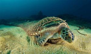 синтетический материал в океане