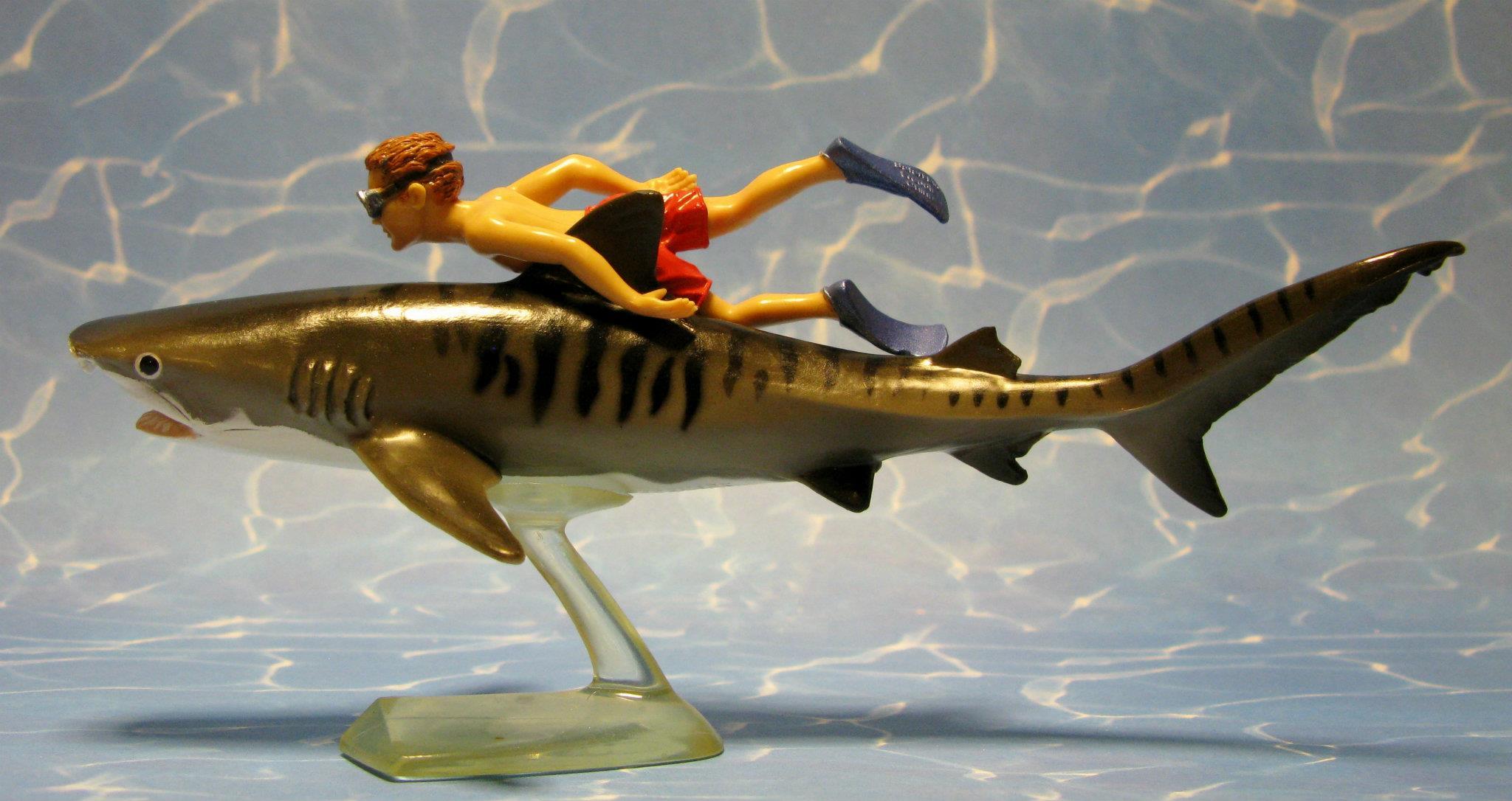 тигровая акула, Tiger shark, Galeocerdo cuvier