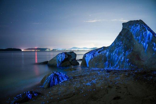 морские светлячки