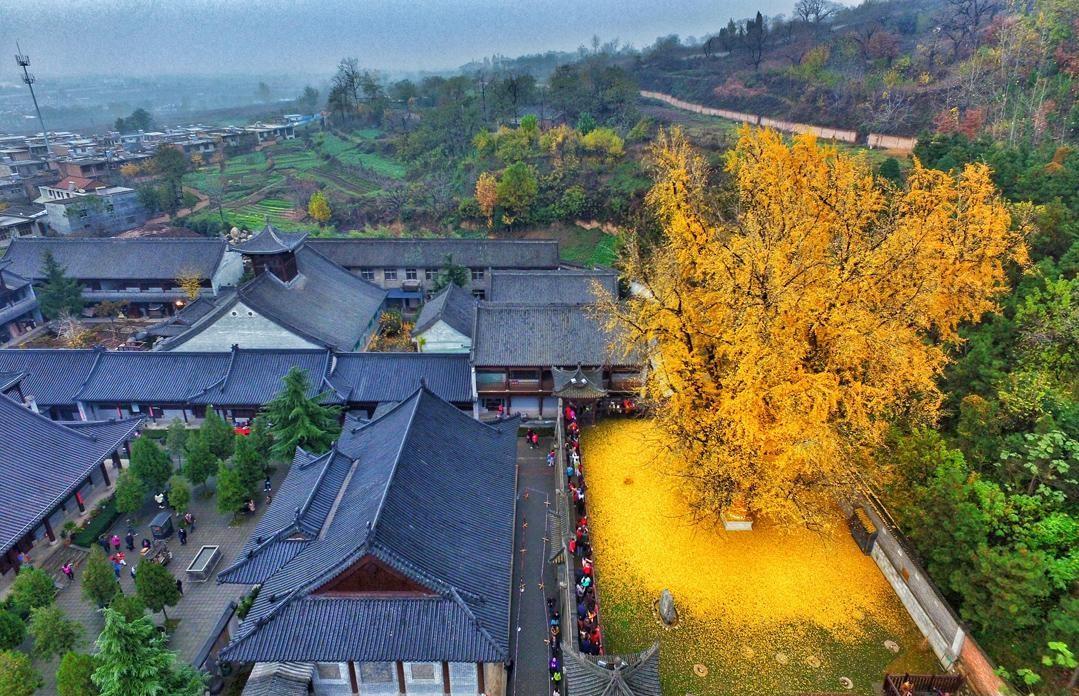1400 летнее дерево