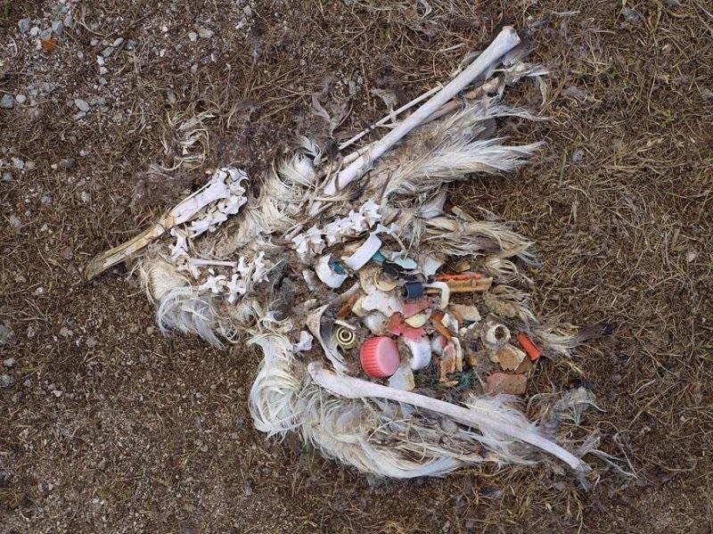 мусор в телах птиц