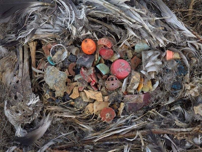 мертвые птицы