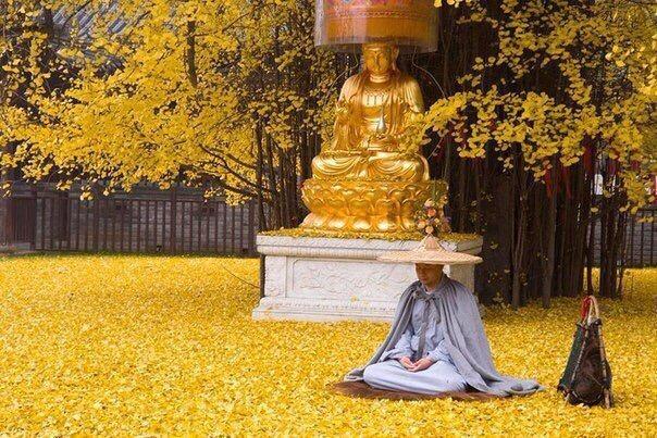 1400 летнее дерево, дворик буддийского храма