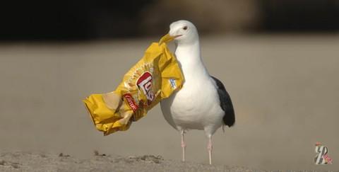 мусор и птицы