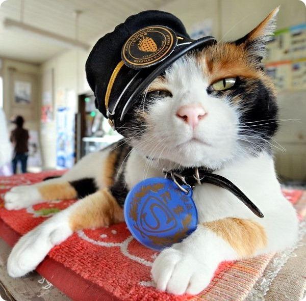 кошка Тама Япония