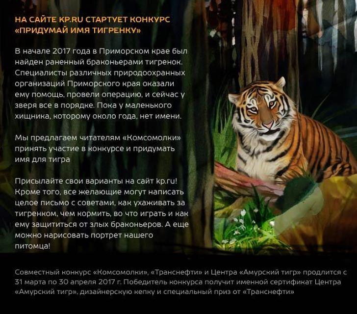 Придумай имя тигренку