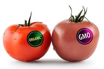 Эко и гмо продукты сравнение по виду