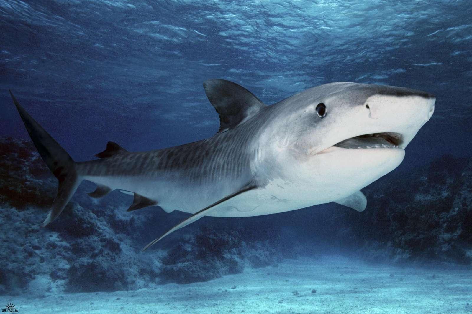 vr видео акула смотреть бесплатно