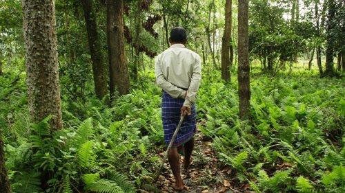 Человек леса