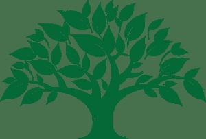 зеленое дерево