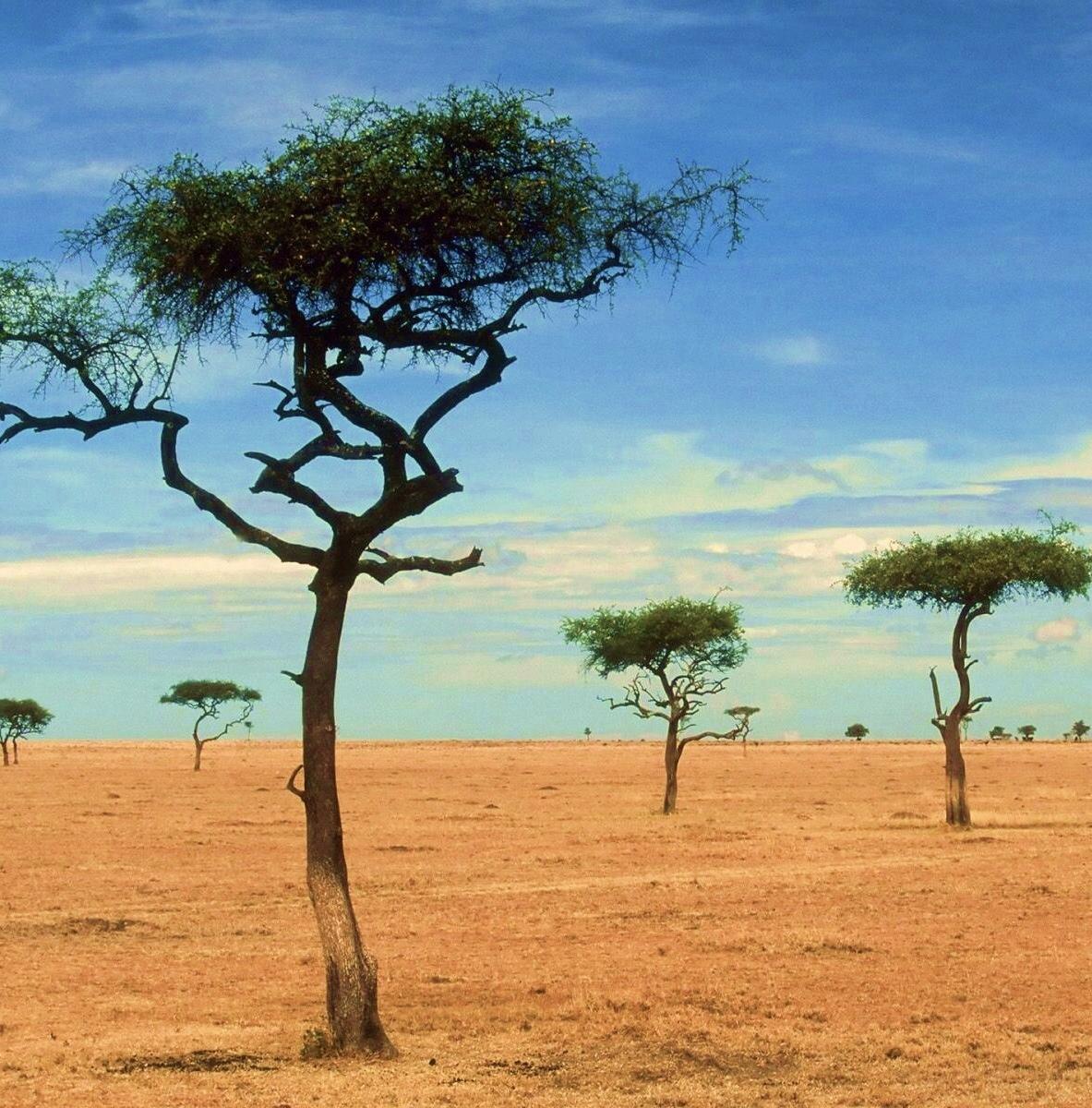 Статистика вымирающих видов растений в Африке