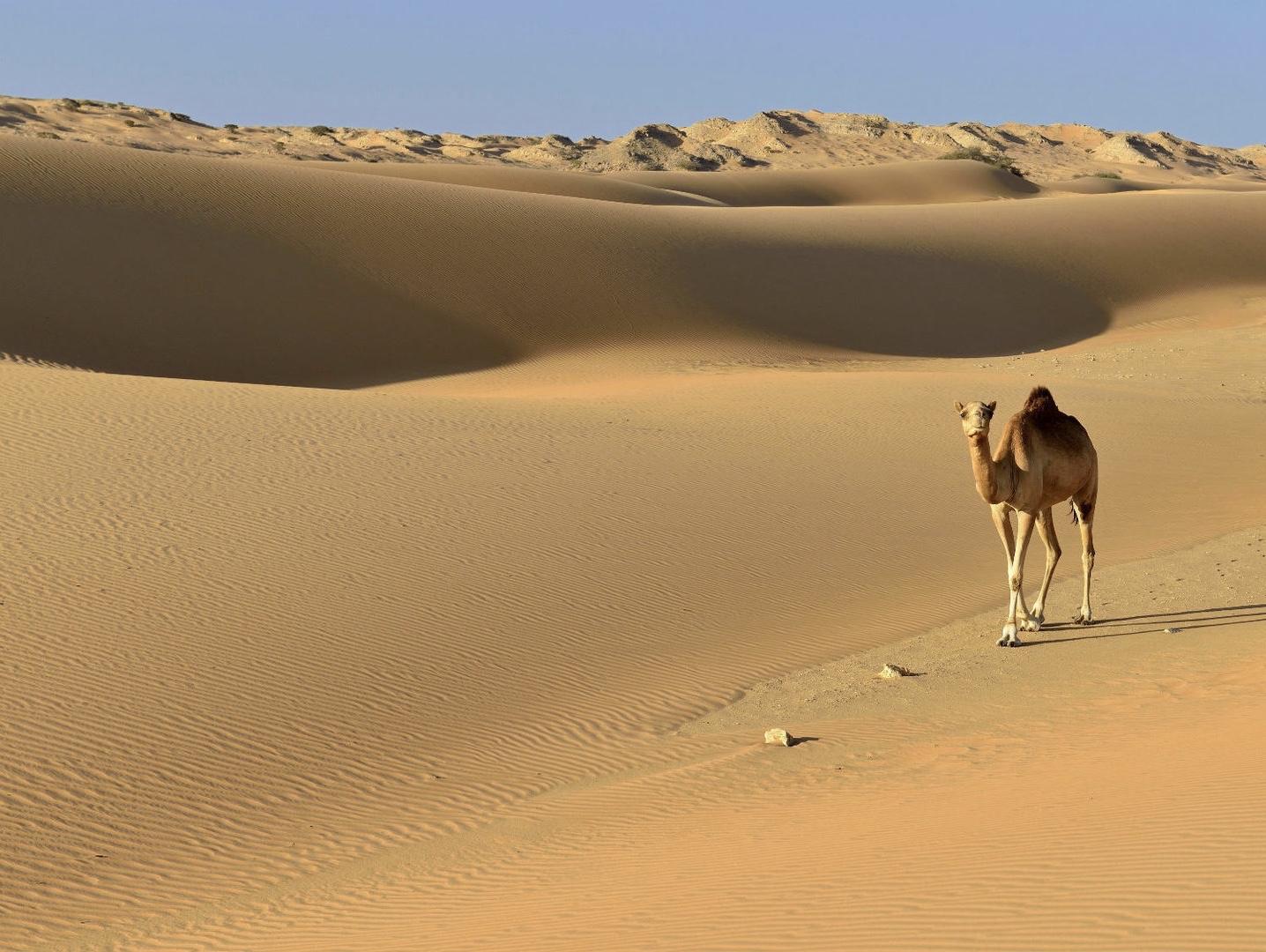 документальный фильм пустыня Сахара. Смертельный марафон.