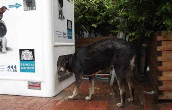 автомат выдает корм бездомным животным