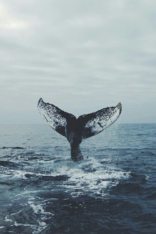 фильм пластиковый океан смотреть онлайн