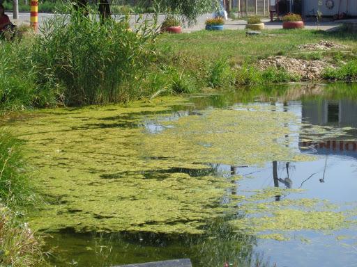 очистка водоема от органики